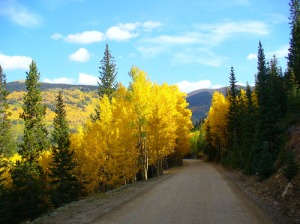 Endless sky and golden aspen in mountains of Colorado