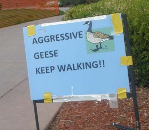 Aggressive geese warning sign