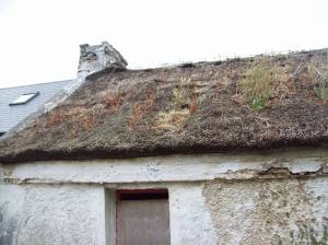 Cottage roof