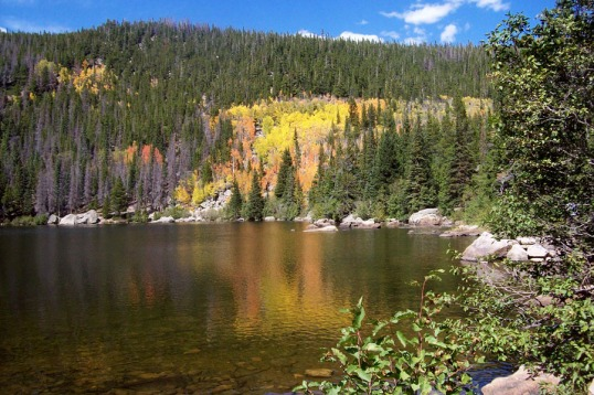 Golden aspens in Rocky Mountain National Park, Sept 2012
