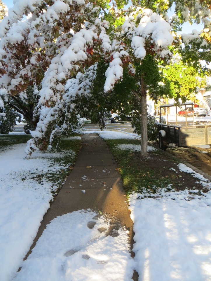 The trees have not yet dropped their leaves so the heavy wet snow can be brutal to the branches.