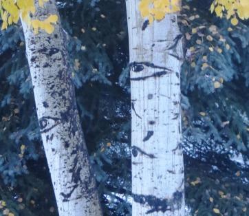 aspen tree with eyes looking through November