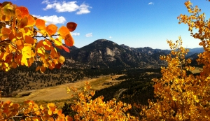 Aspens in Rocky Mountain National Park, Colorado