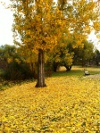gold tree and falling leaves