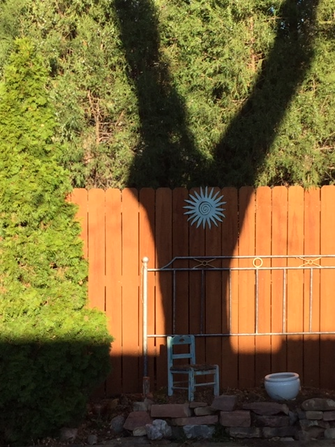 Shadow of tree on fence in spring during isolation time of coronavirus